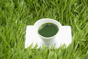 Shot of Wheatgrass Juice
